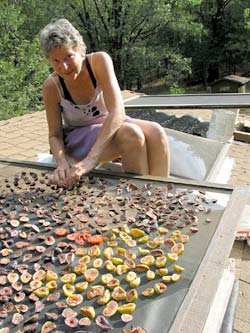 090910_drying_fruit_250.jpg