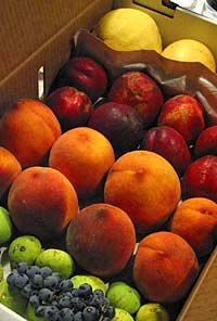091011_fruit_csa_box_200.jpg