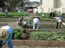 Pitching In at a Community Garden