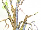 The Great Oak: Sacrifice and Liberation