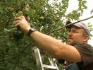 Portland's Backyard Fruit — From Waste to Feast (217)