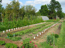 The Giving Is Growing at Monroe's Sharing Garden