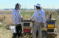 beekeepers_300