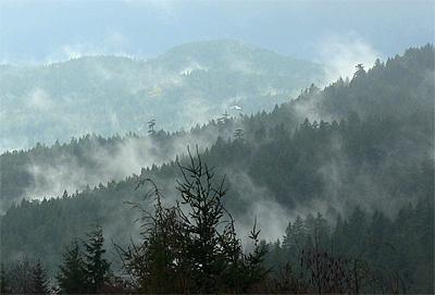 mist_arising
