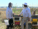 Beekeeping Takes Flight at Sea-Tac Airport (273)