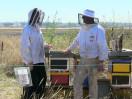 Beekeeping Takes Flight at Sea-Tac Airport (273)